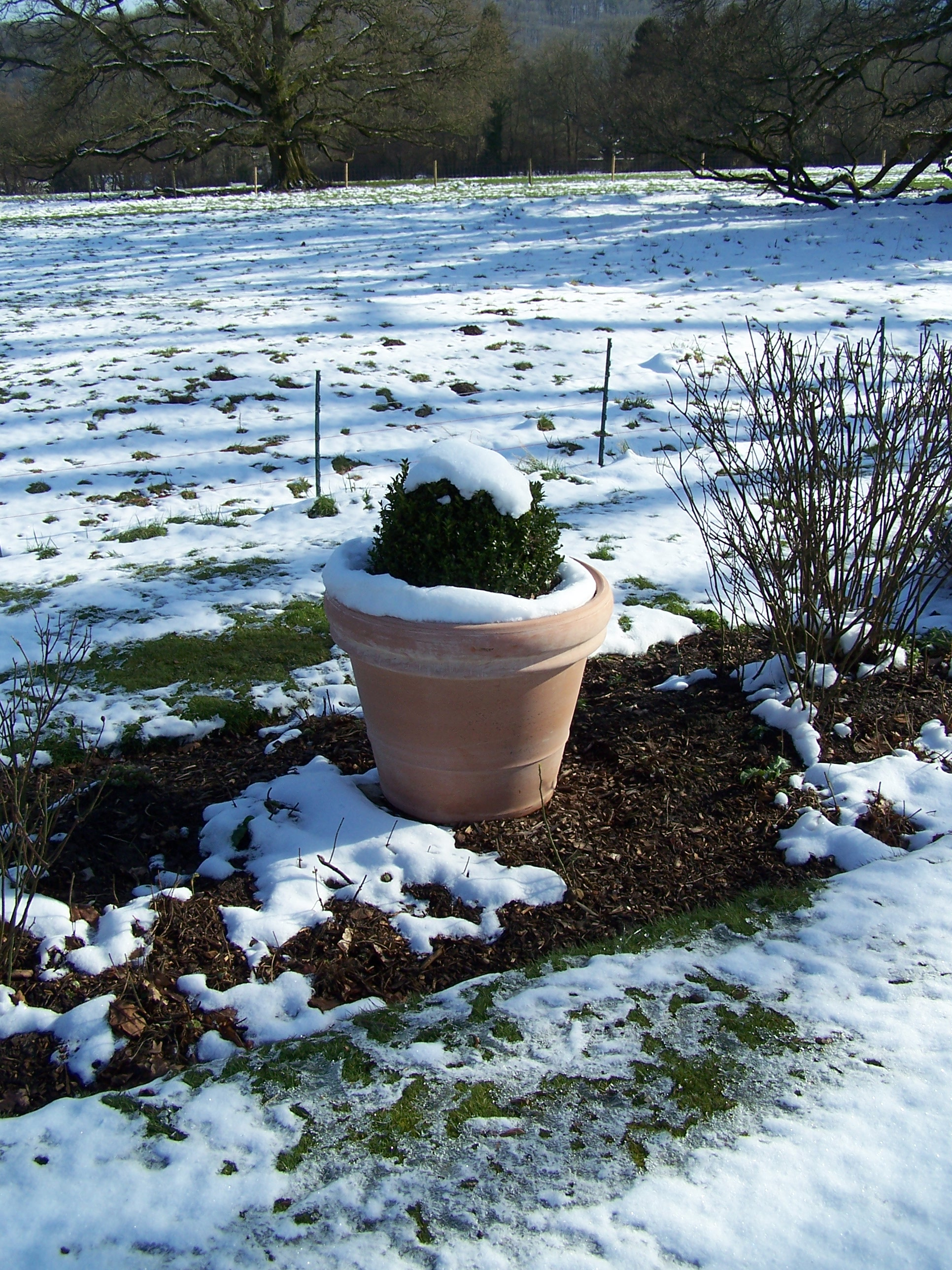 One of the new pots in the melting snow