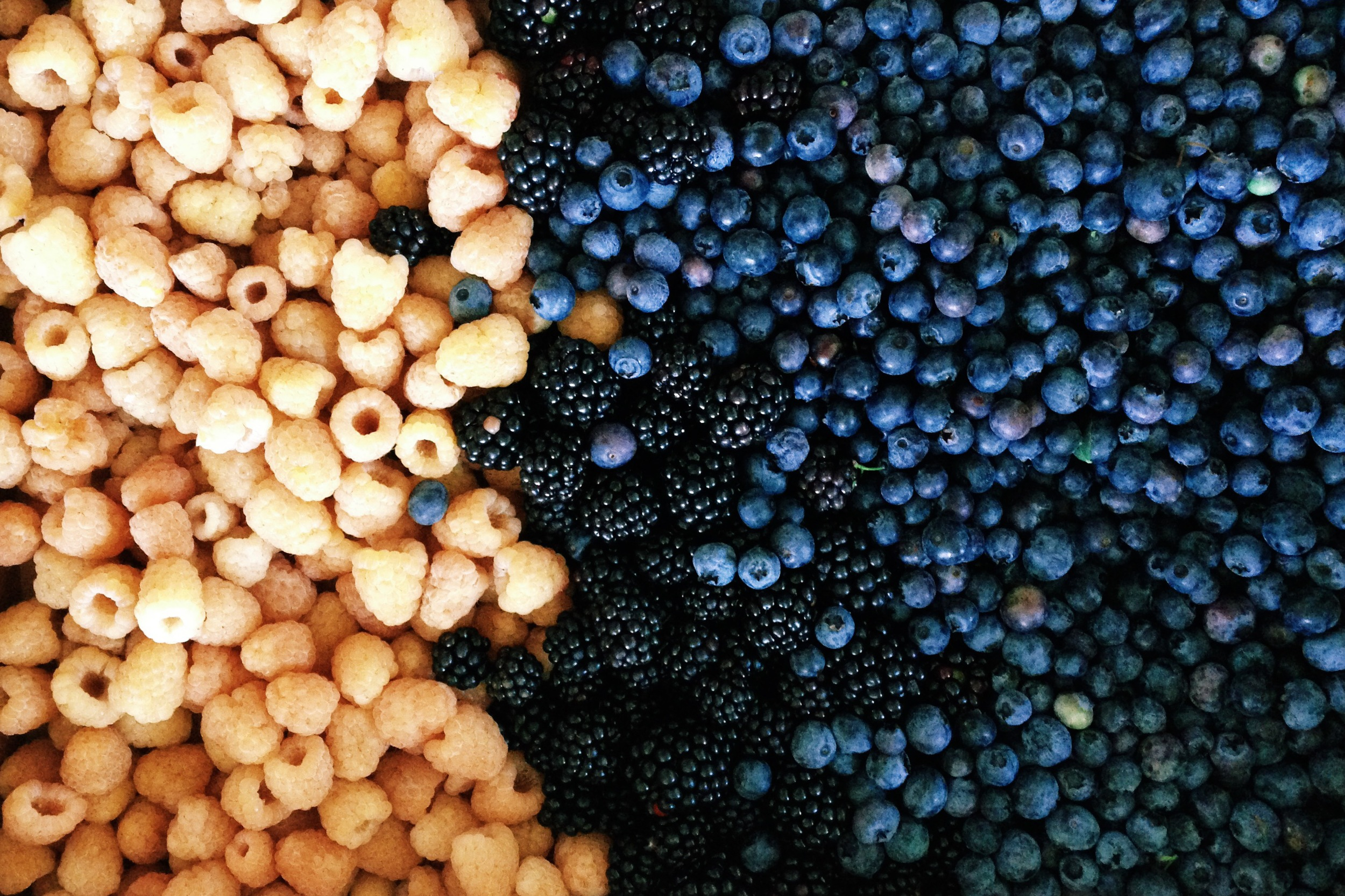 the berries we picked