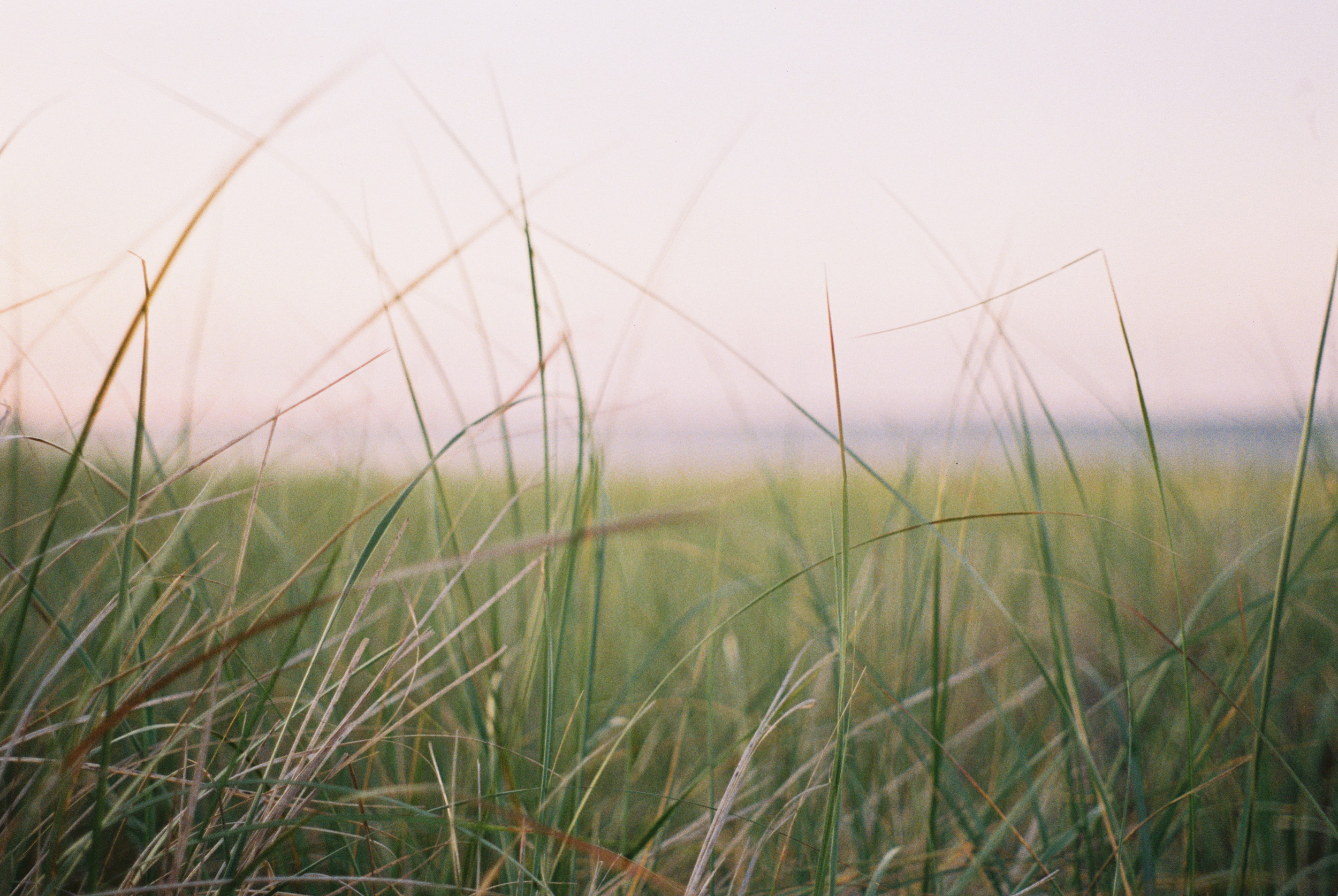 beach_grass-straighten.jpg