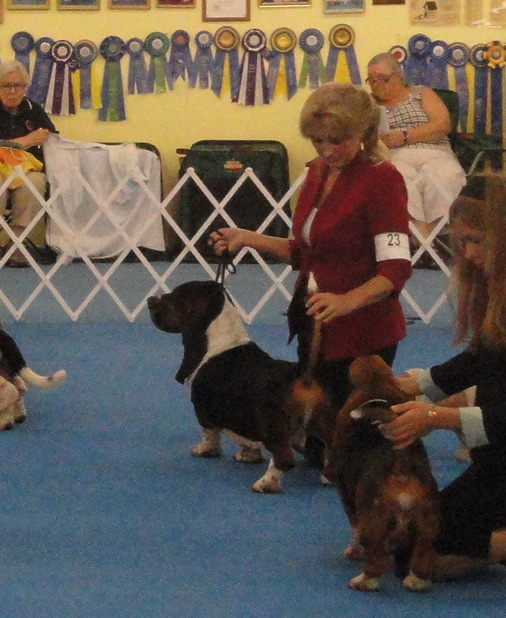 SUSQUEHANNA BASSET HOUND SPECIALITY - CORKEY'S DARK DUKE MORAVIA BRAY - 4th place in open class dogs