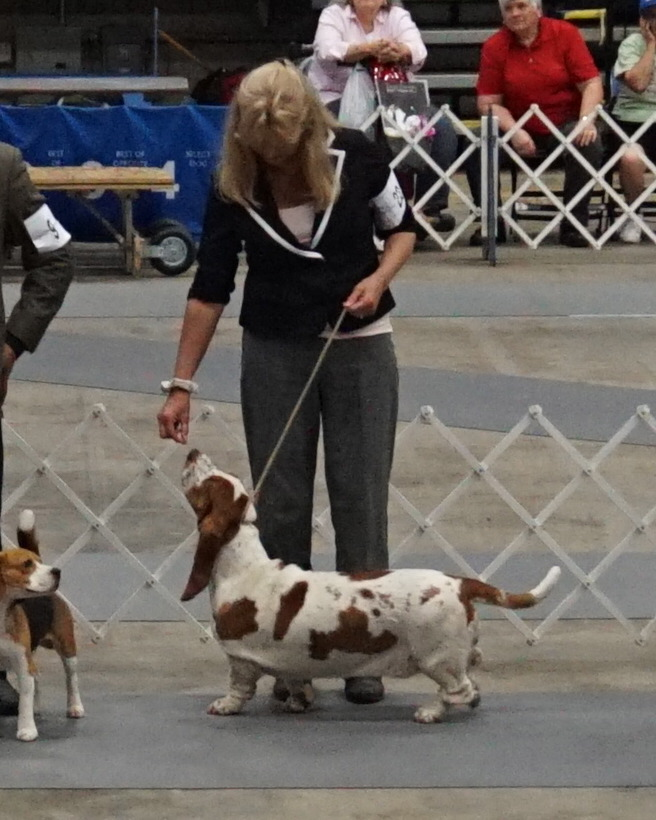 """I love my hounds and I love the show ring. I credit the Lord for all my blessings, He is the giver of good gifts."" Nancy Corkey"