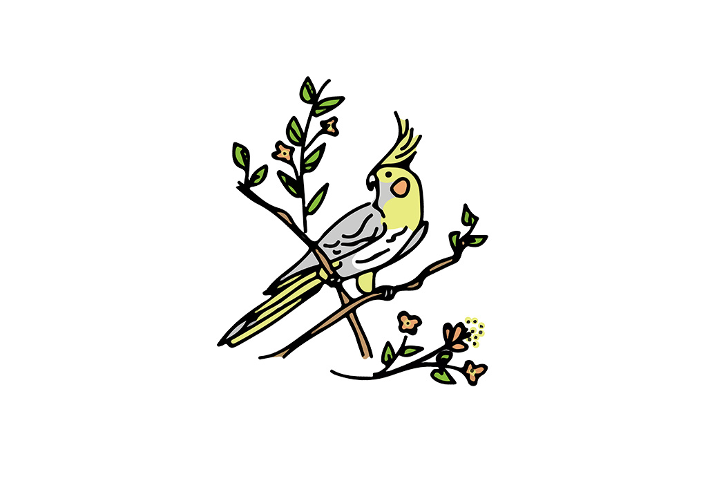 cockatiel-branch