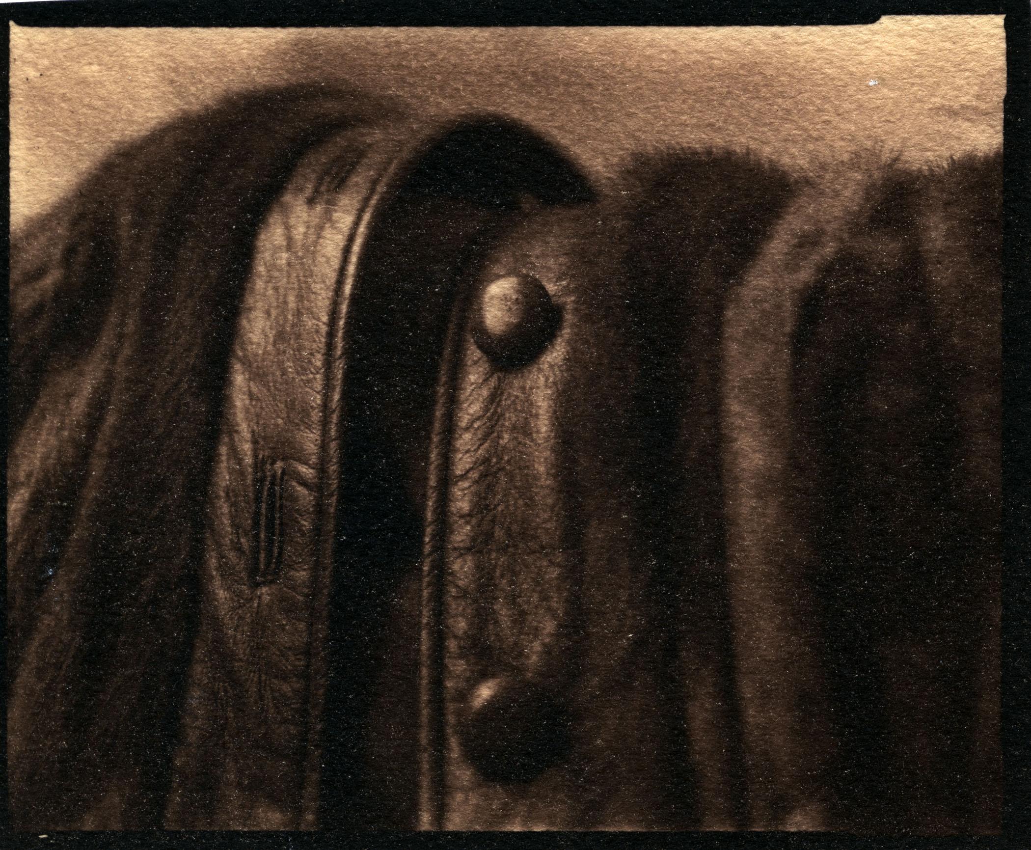 Anne's Coat    Toned Cyanotype, 2015