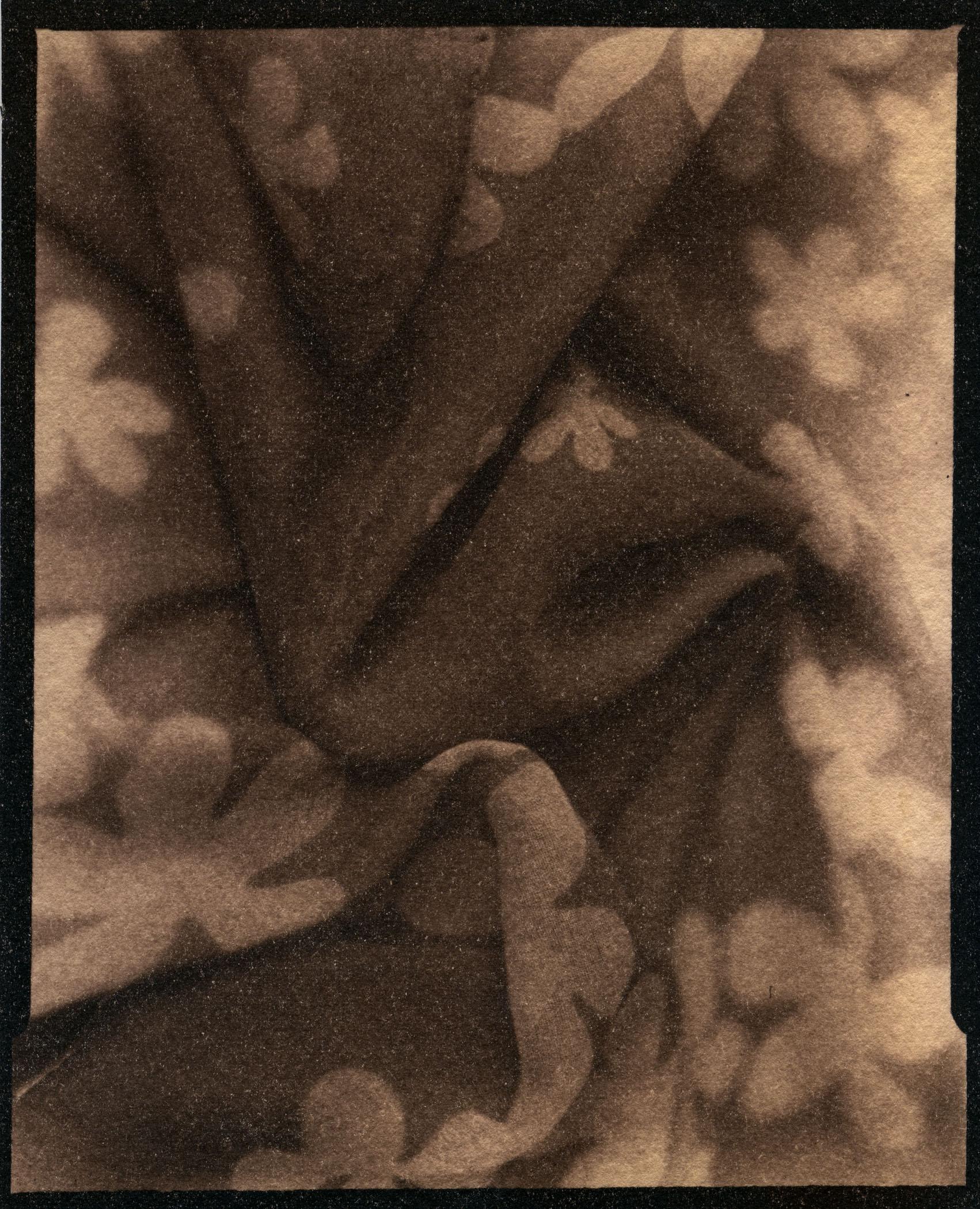 Anne's Scarf    Toned Cyanotype, 2015