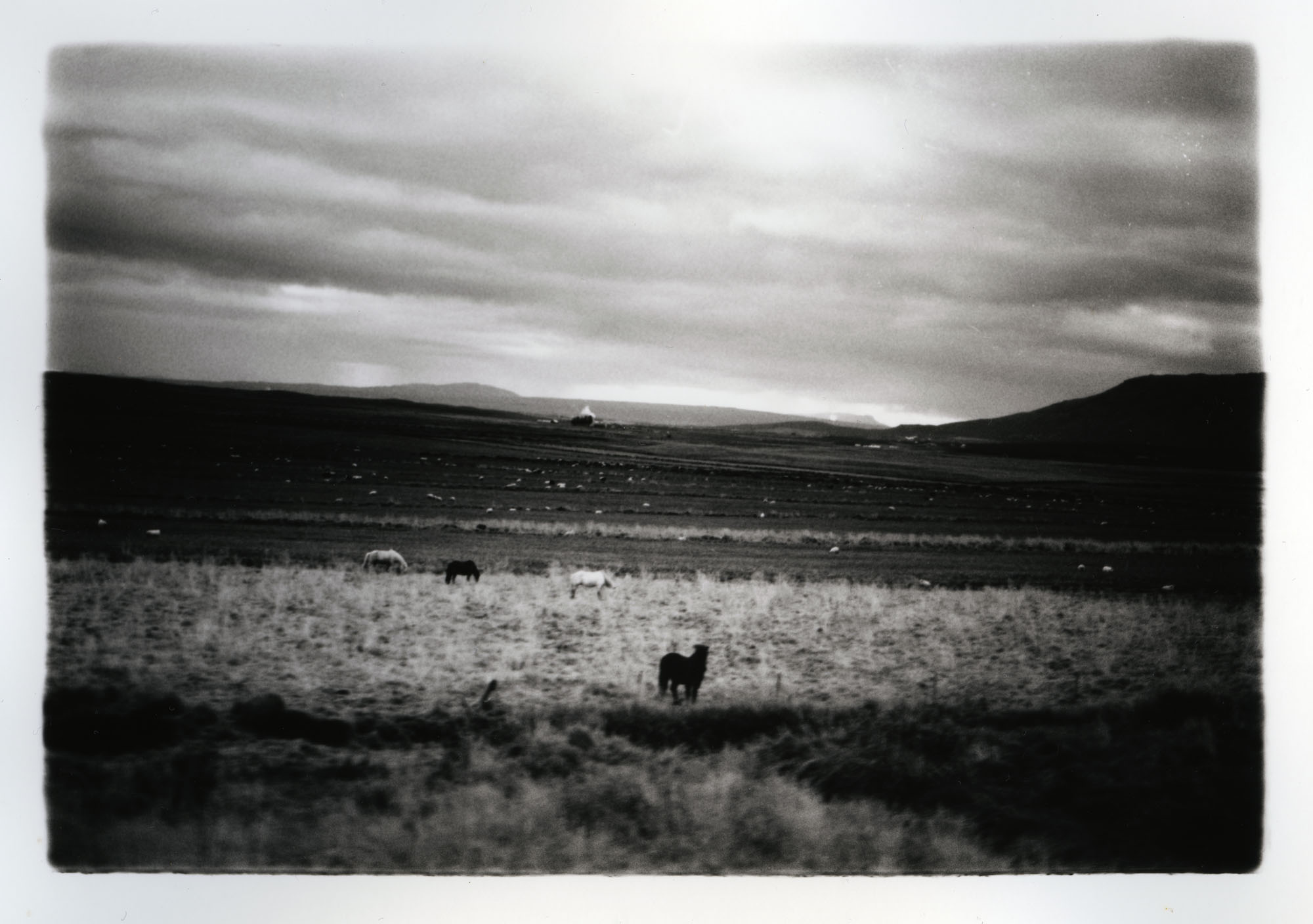 Horses, Dogs, and Sheep    Silver Gelatin Print, Iceland, 2015