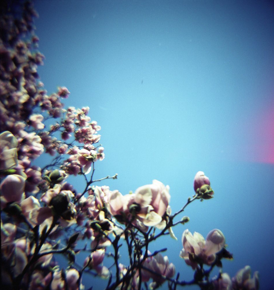 flowersdiana-kodak160vc.jpg