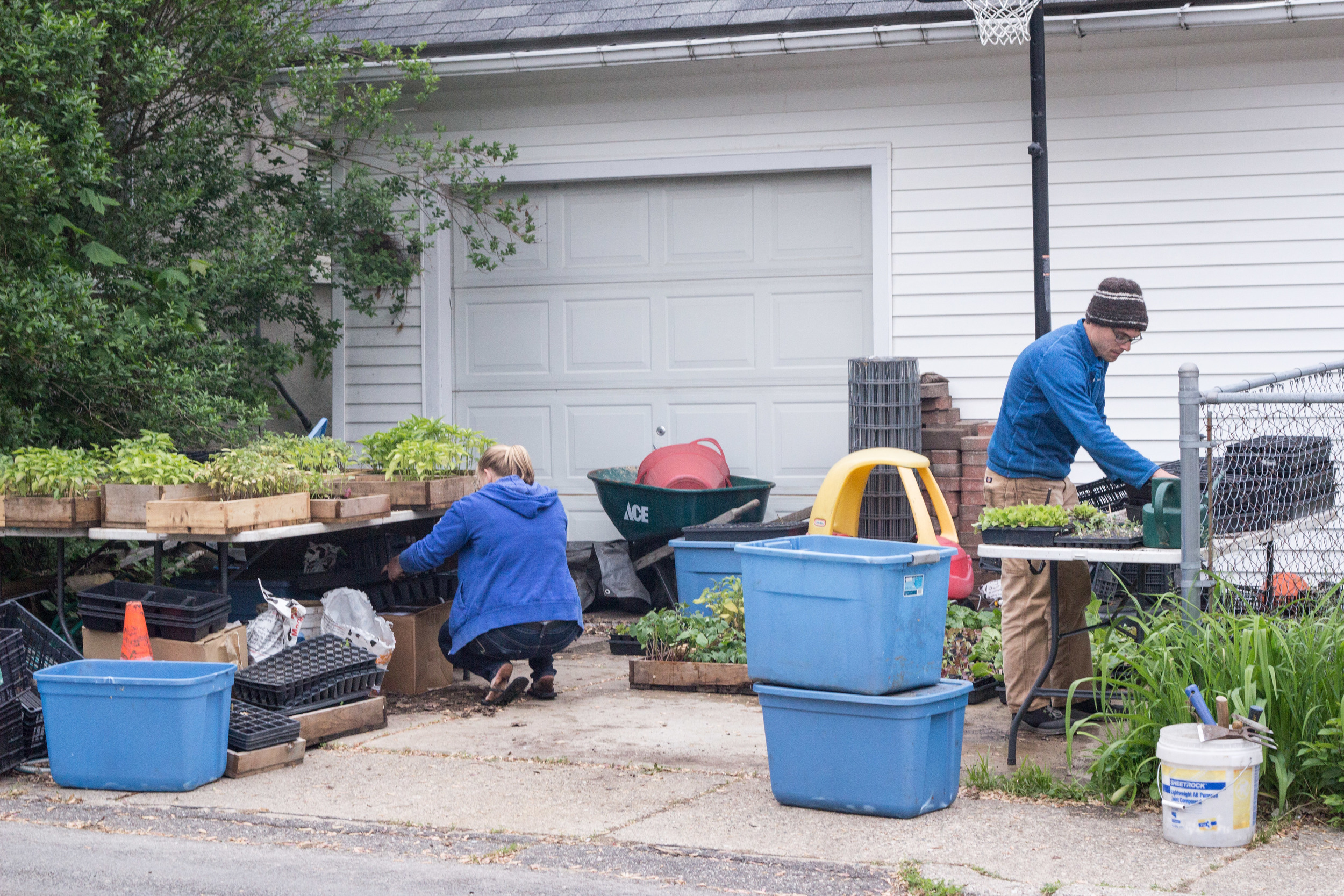 Urban Roots grows right in the city