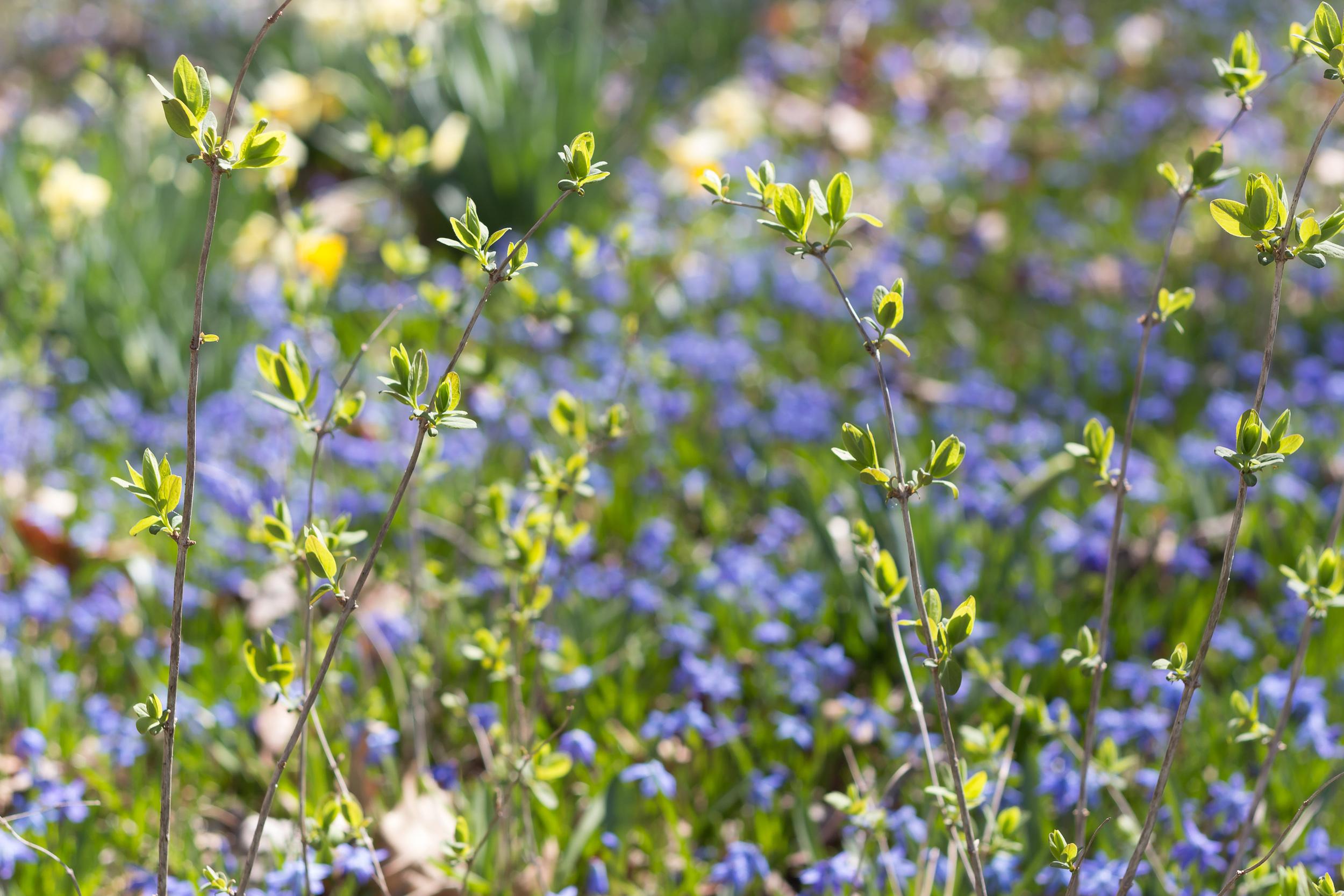 springblogpost-7.jpg