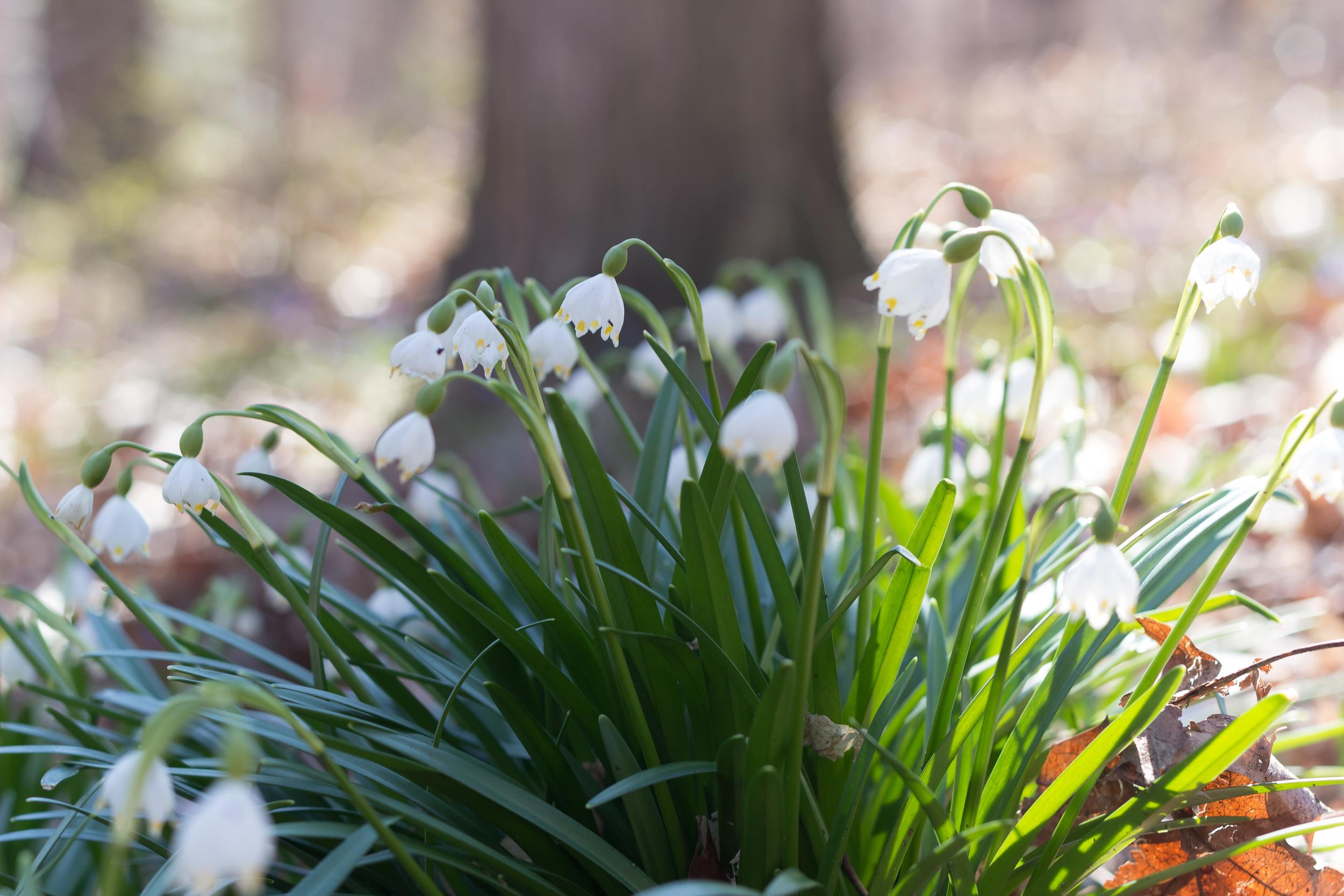springblogpost-11.jpg