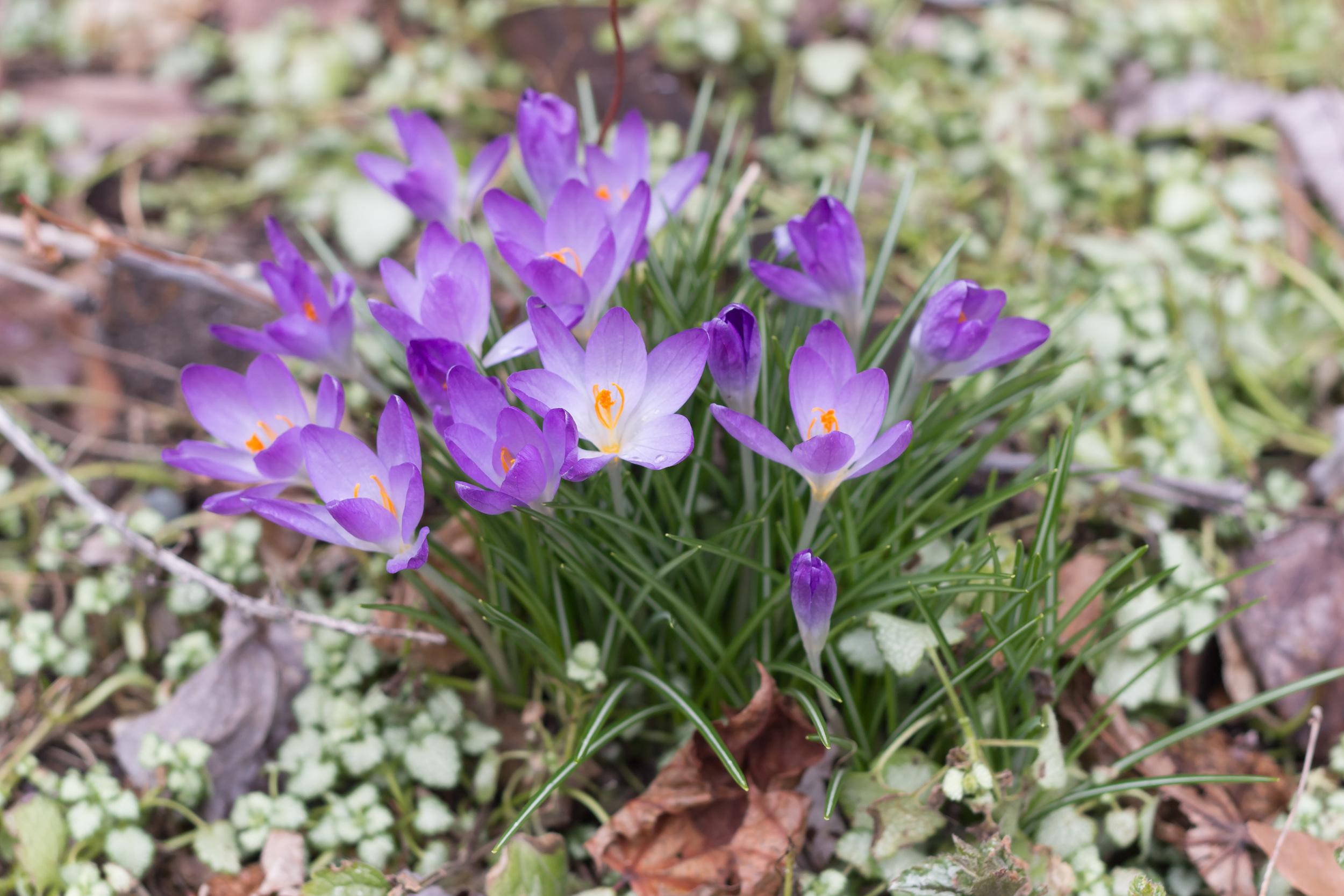 springblogpost-17.jpg