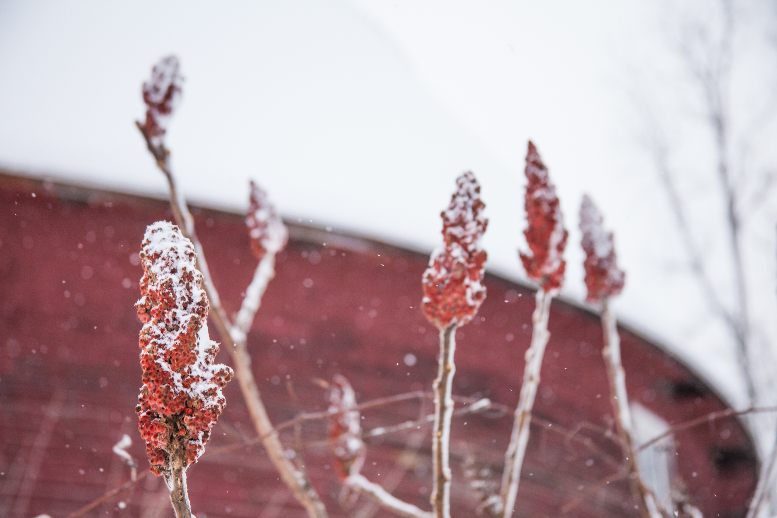 WinterinMichigan-3.jpg