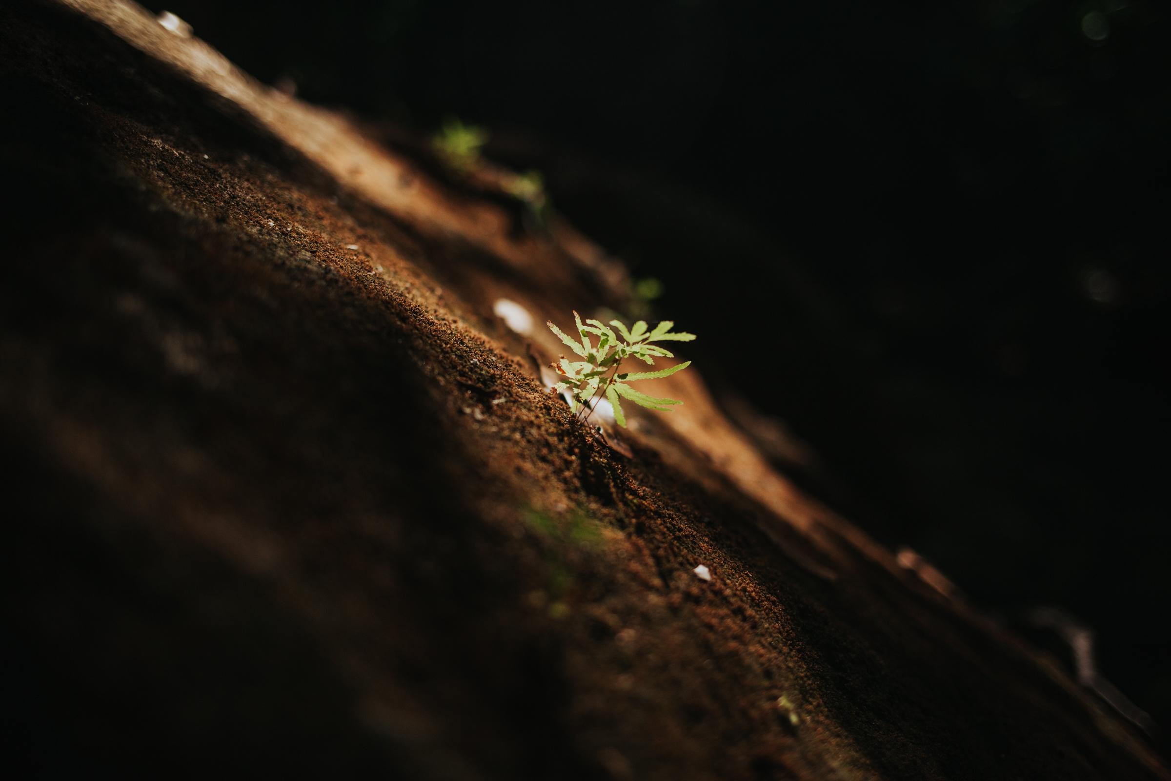 meganlendmanphotography_explore_2018-montezuma-11.jpg