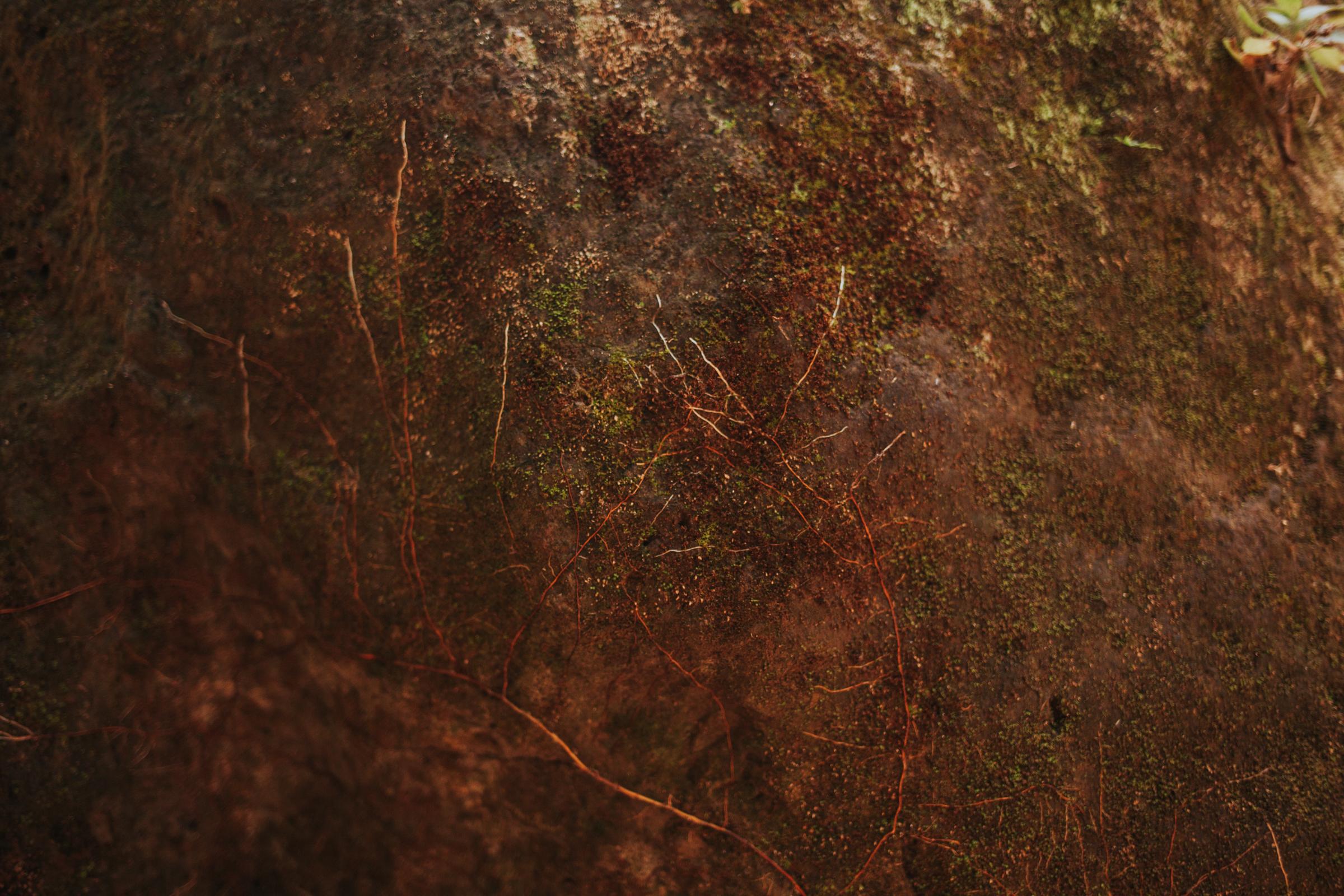 meganlendmanphotography_explore_2018-montezuma-13.jpg