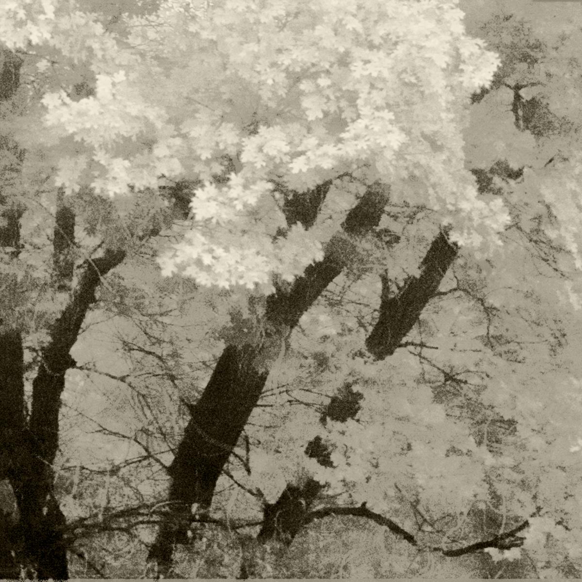 Aki (Autumn)