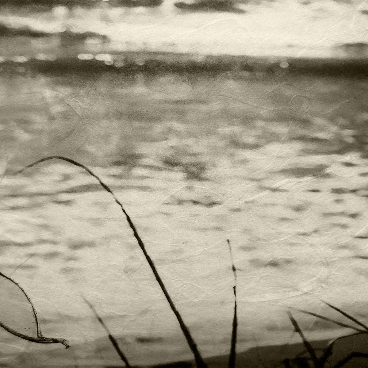 Ashi (Reeds)