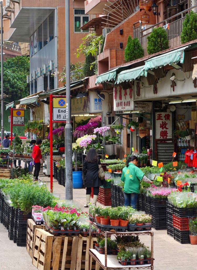 hong-kong-flower-market-bird-market-starting-with-a-blog-12-870x1189-749x1024-1.jpg