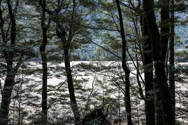034_Kiwi_Mountains_3527.jpg
