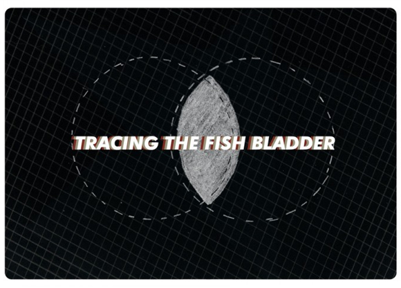 Tracing The Fish Bladder
