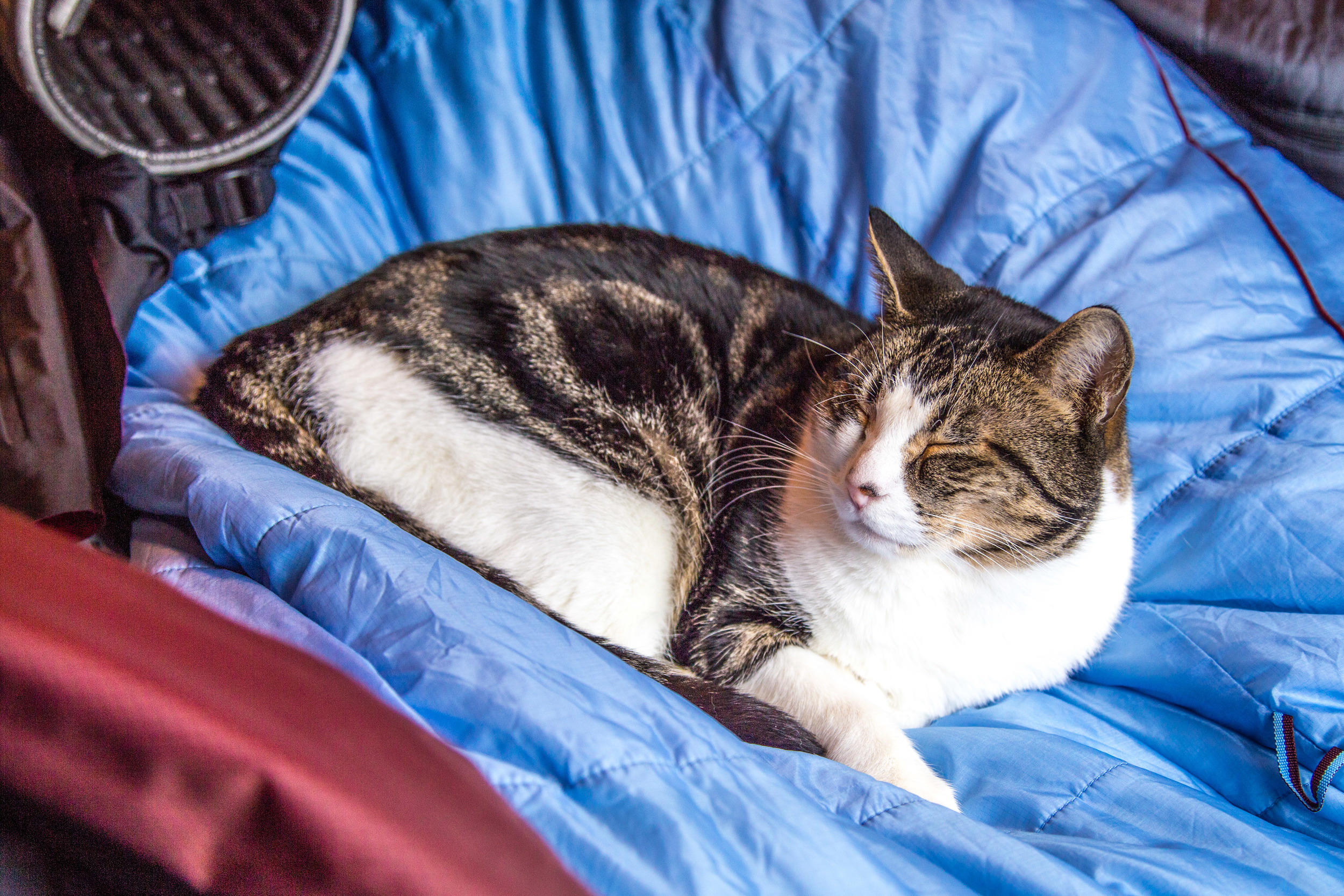 "Our adventure cat Hobbes was very happy to find a pile of sleeping bags airing out on ""his"" bed."