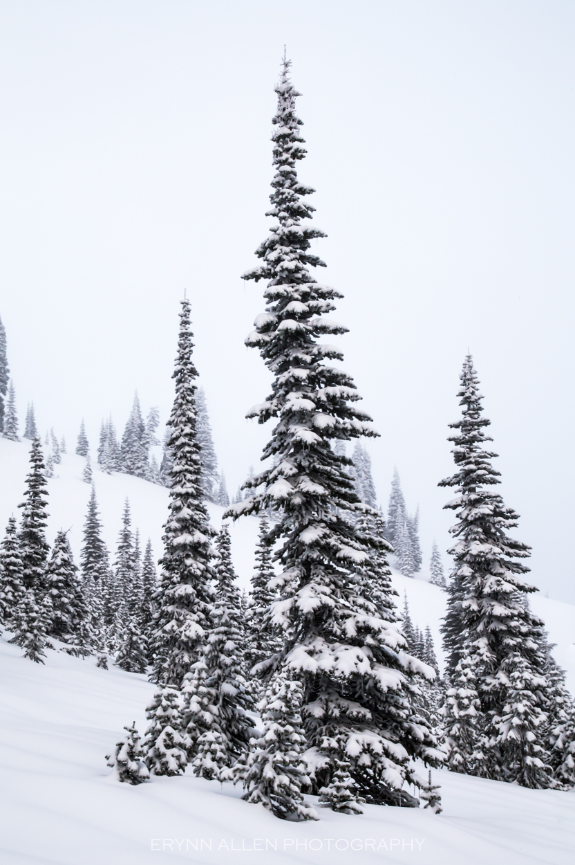 I straight up love snow on trees.