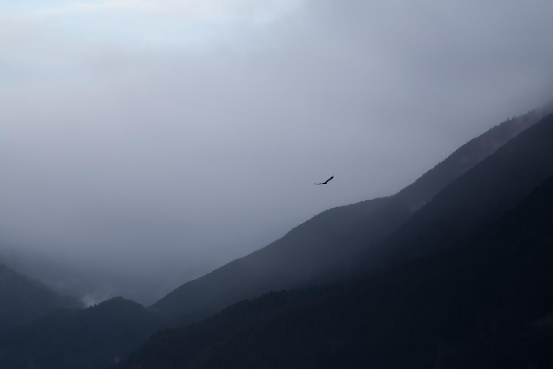 Eagle soaring above the lake