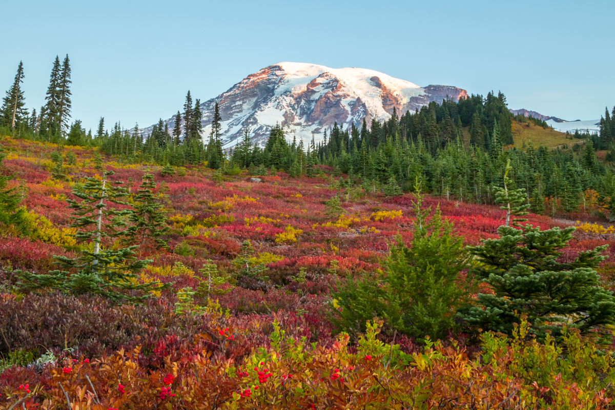 Meadow of Fall