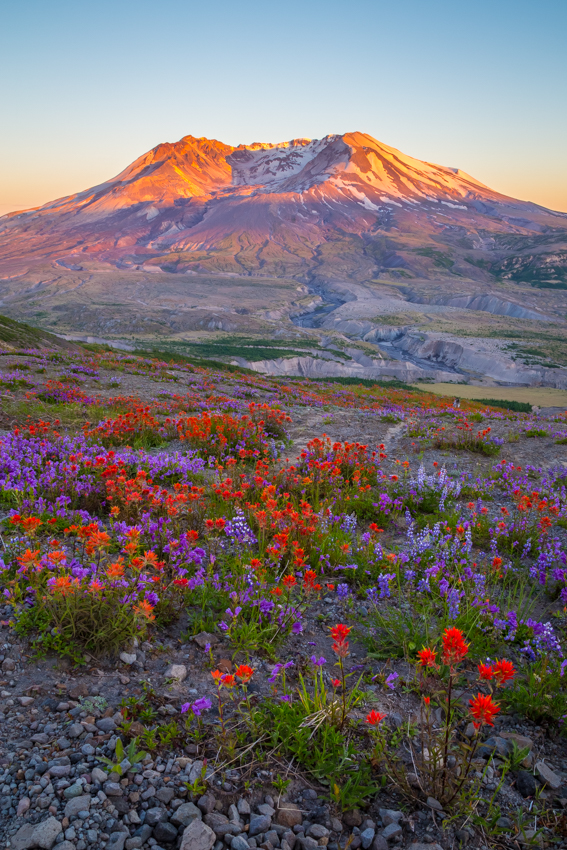 "Beauty from Ashes   LOOWIT / MOUNT ST. HELENS  16x24 Canvas Print      By the faith that the wild-flowers show when  they bloom unbidden    - Henry van Dyke, ""God of the Open Air"""