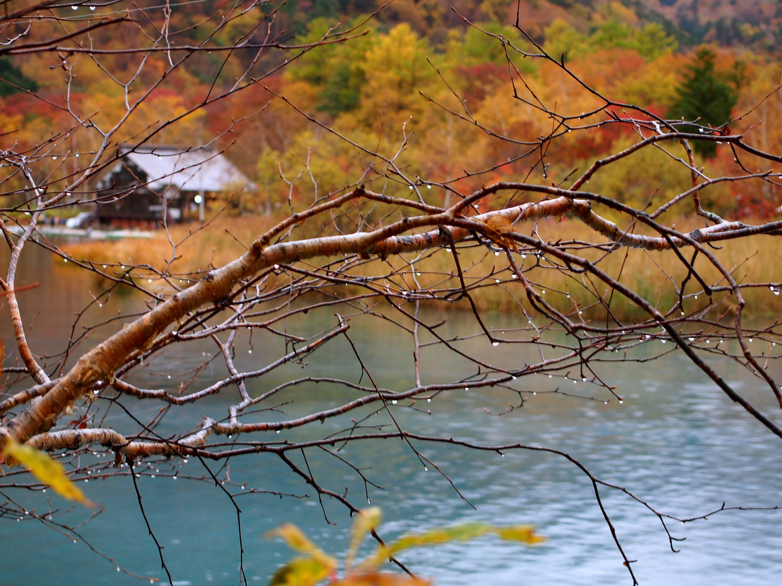 Incorporate Nature INto Your Travels : This was taken in Nikko, Japan during the start of Autumn.
