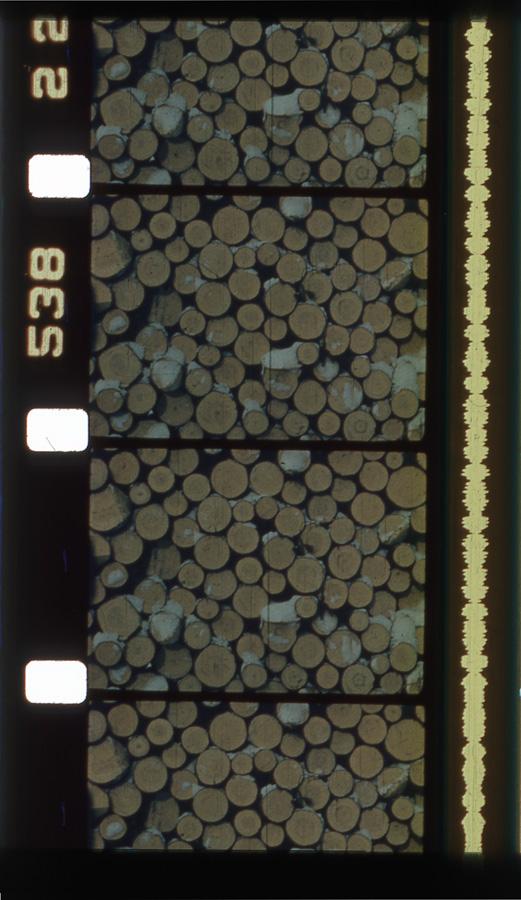 logs for naoimi.jpg