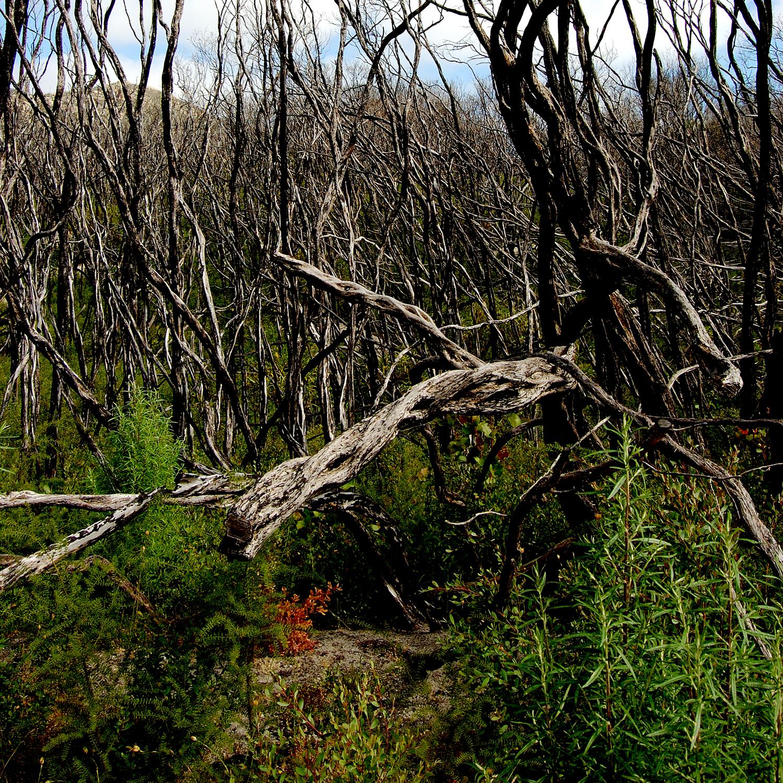 untitled #112 [wilson's promontory, victoria, australia, 2006]