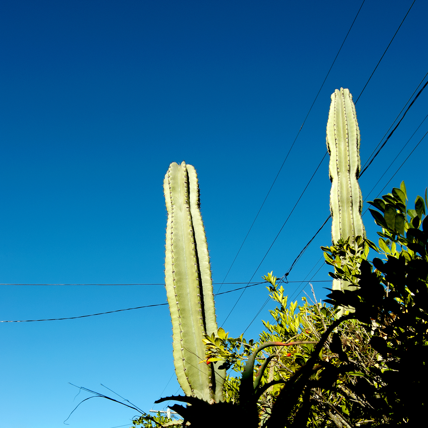 you're cactus [greenslopes, queensland, australia, 2010]