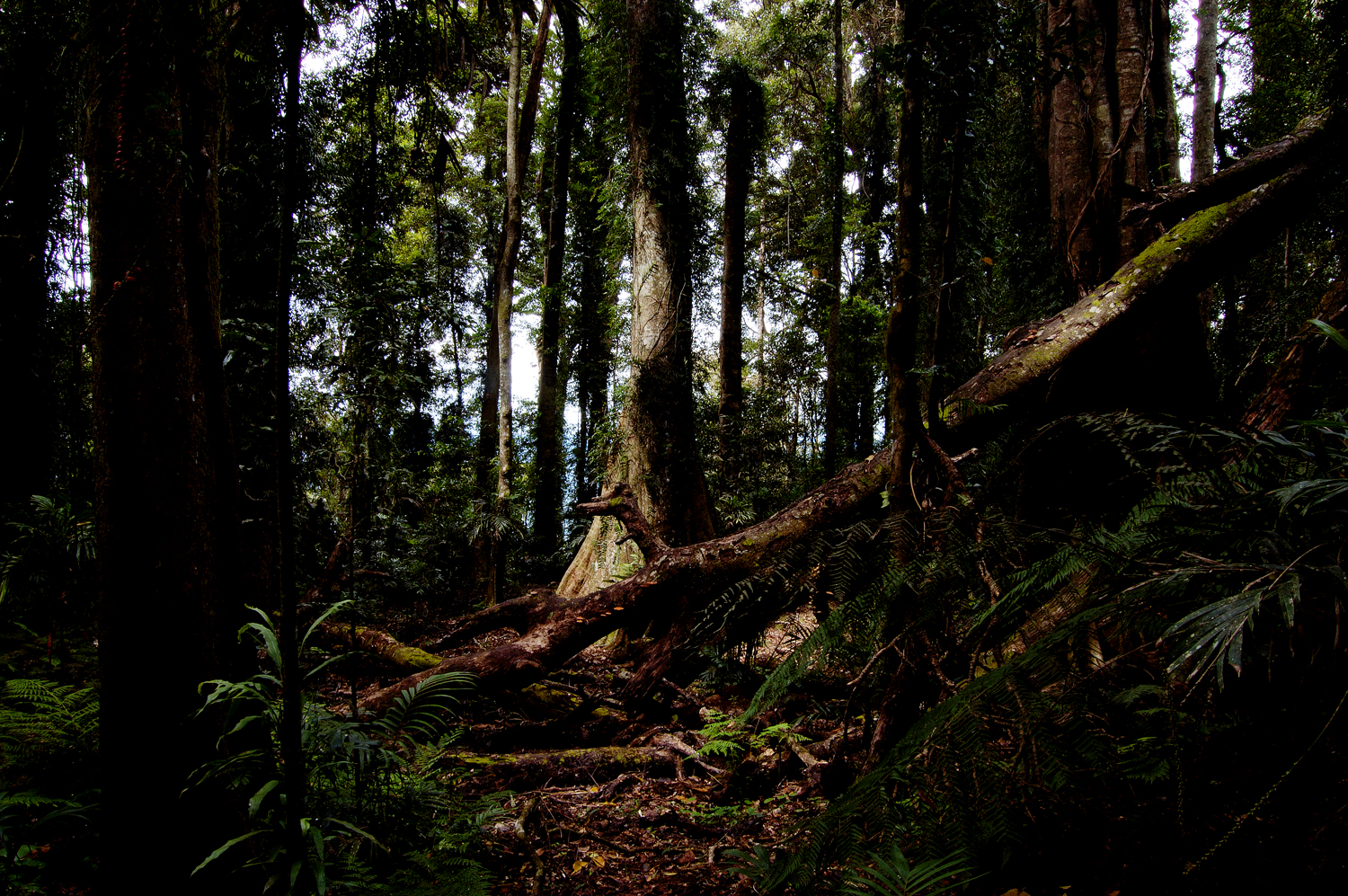 untitled #66 [dorrigo national park, new south wales, australia, 2010]