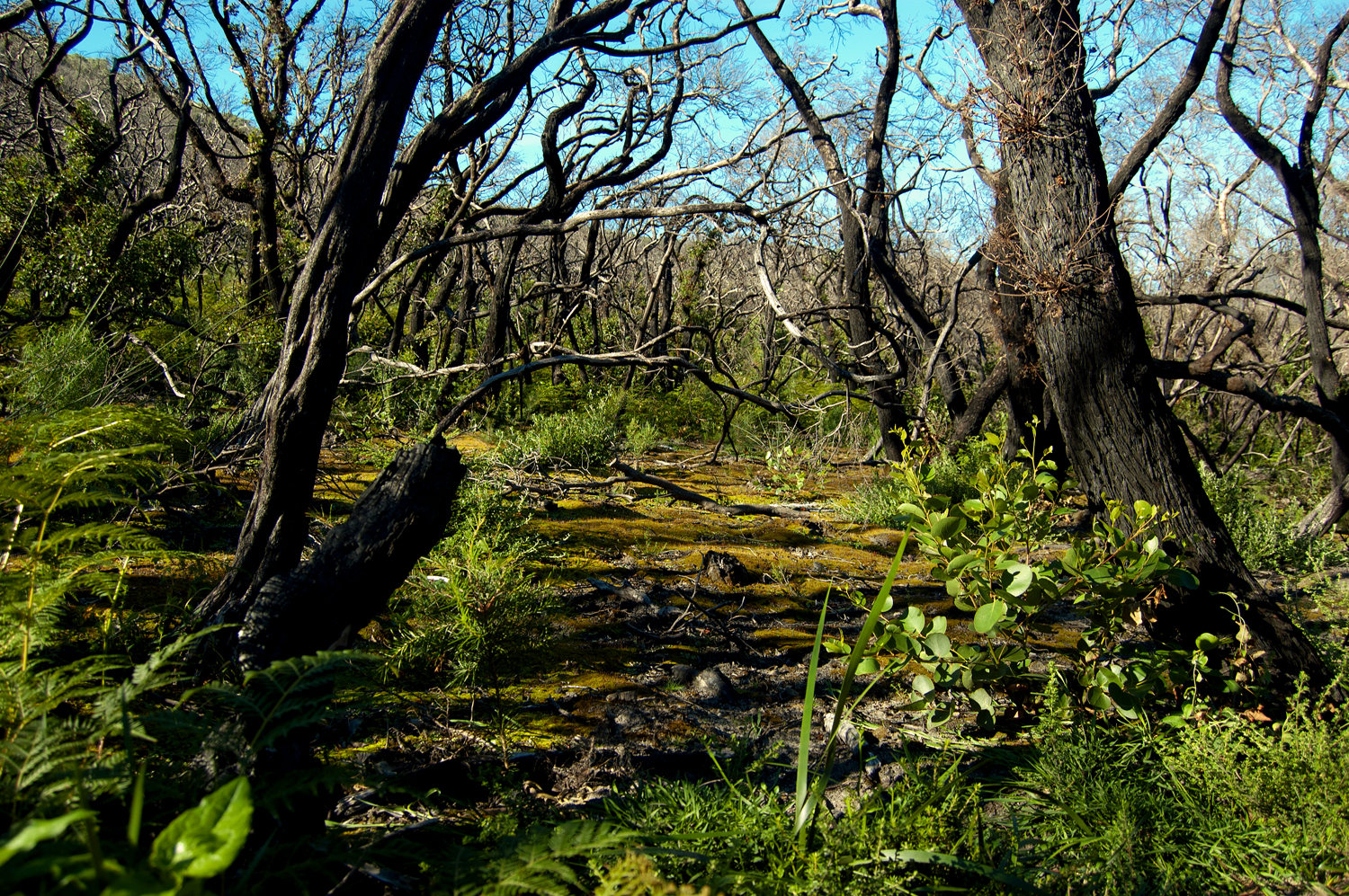 untitled #80 [lilly pilly gully, wilson's promontory national park, victoria, australia, 2010]