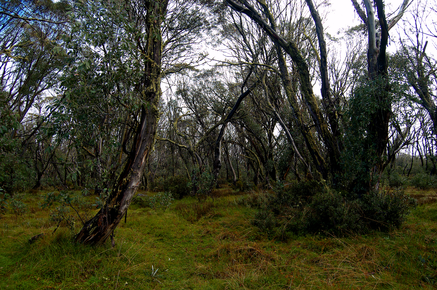 untitled #187 [raspberry hill picnic area, alpine national park, victoria, australia, 2010]