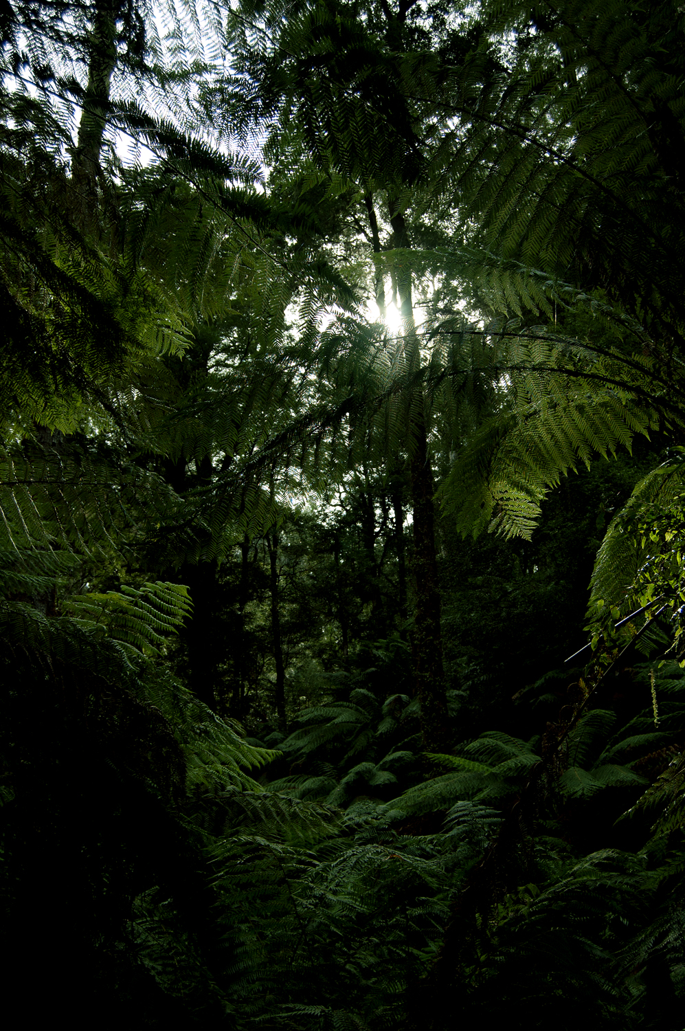 untitled #249 [tarra valley, tarra bulga national park, victoria, australia, 2010]