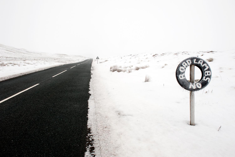 road lambs no [warcop ranges, warcop, cumbria, england, 2012]