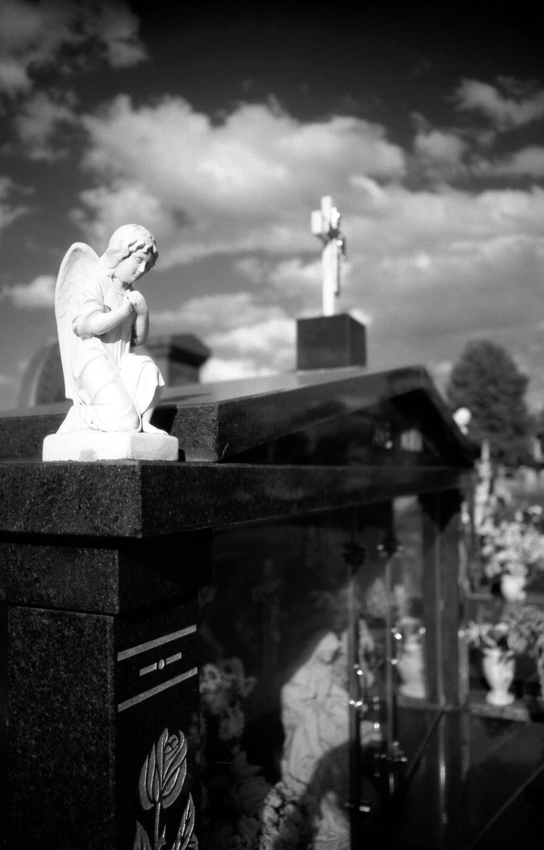 untitled [melbourne general cemetery, parkville, victoria, australia, 2005]