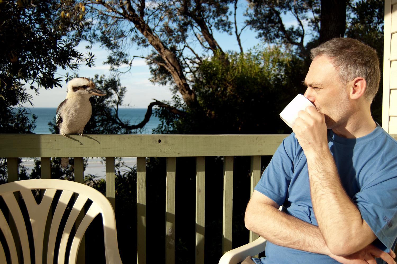 Kookaburra_Philip_Ivens_26032010115.jpg