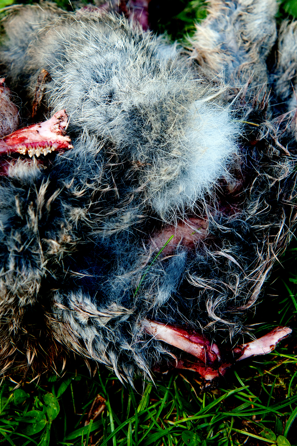 fur from flesh