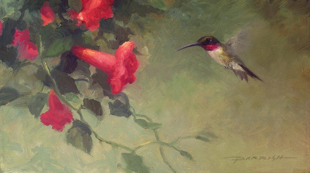 Humming-Bird-Web-1000.jpg
