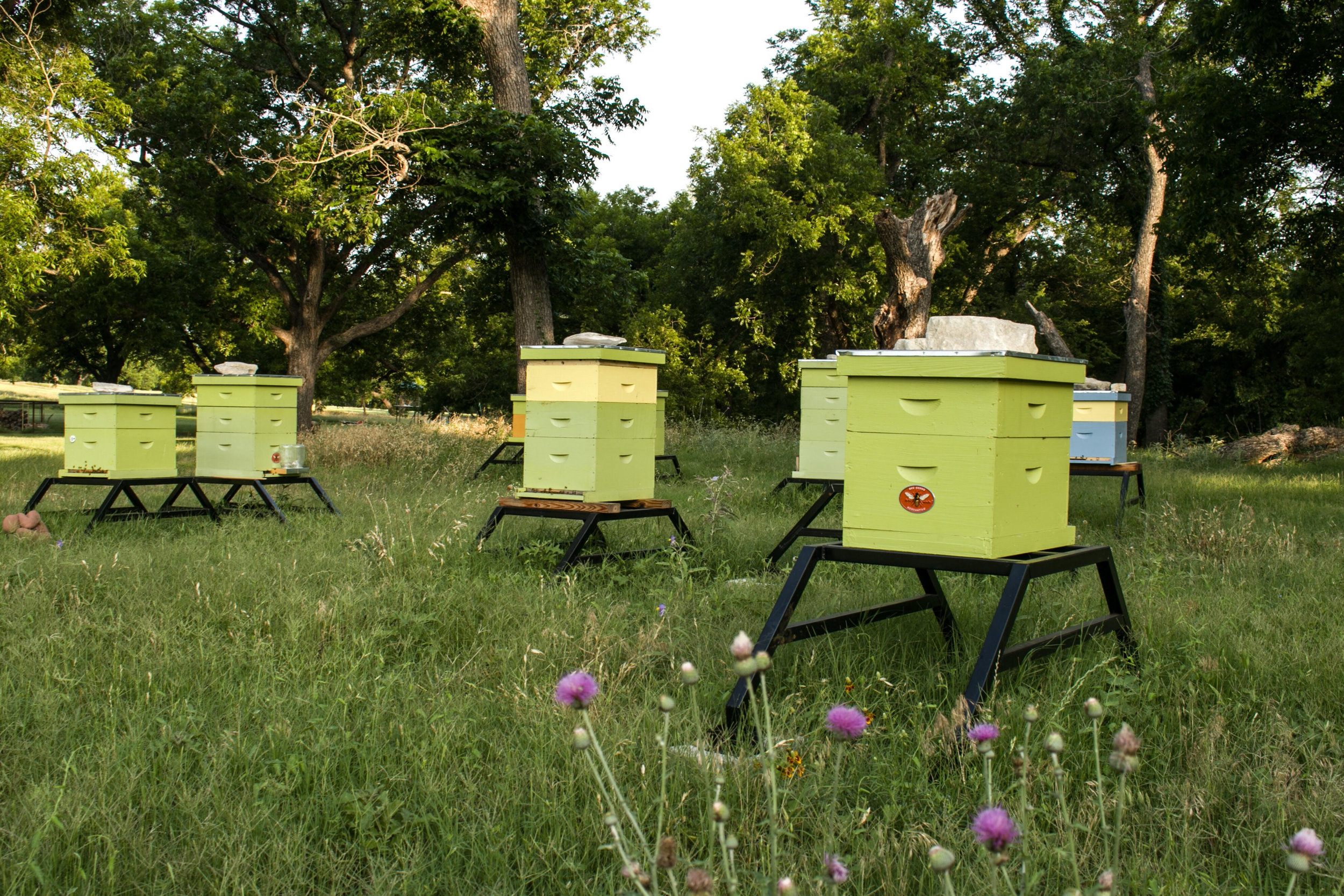 Our hives at rancho incognito in central texas