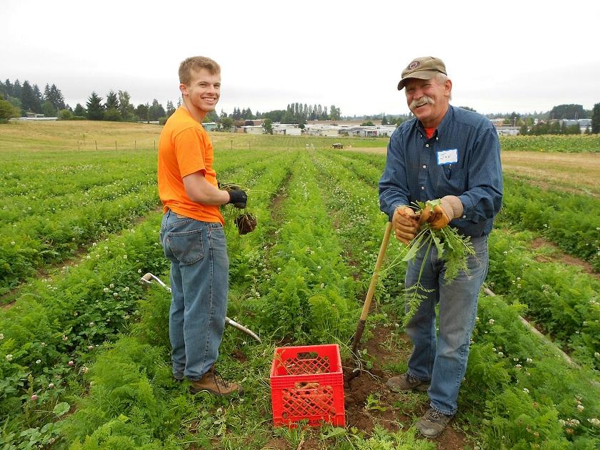 carrot harvest 8-18-12 006.JPG