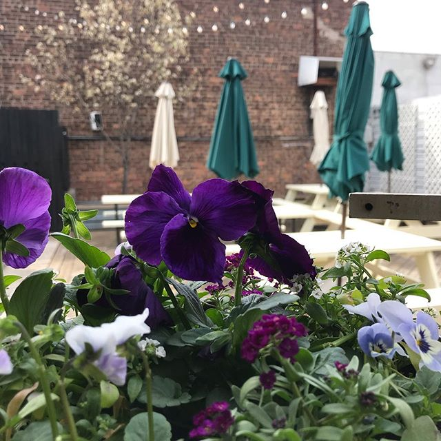 Spring has sprung bb 🌺 Happy Hour Food & Drinks all nite, let's celebrate 🥳 . . . #gowanus #gowanusbesthappyhour #brooklyn #backyard #brews #babes #localsonly
