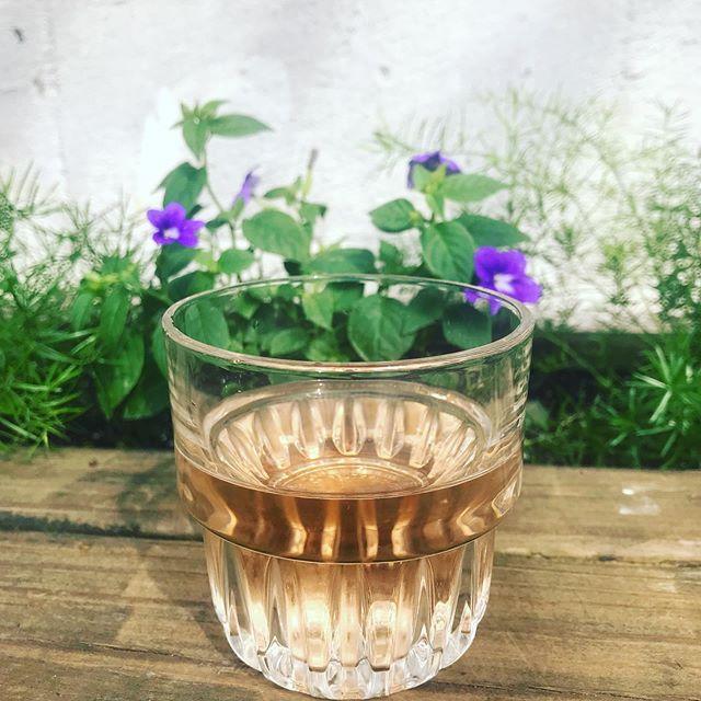 🤴👸 . . . . #rosèseason #alldayrosè #backyard #babes #localsonly #gowanus #lavenderlake