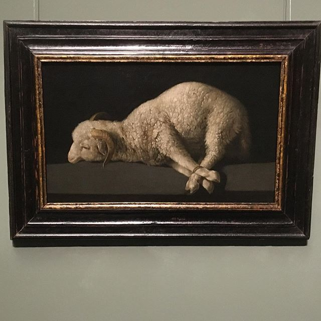 Zurbarán's Agnus Dei in the Prado, Madrid. What an extraordinary piece of art. Soft. Filled with light. Tender. Terrible.