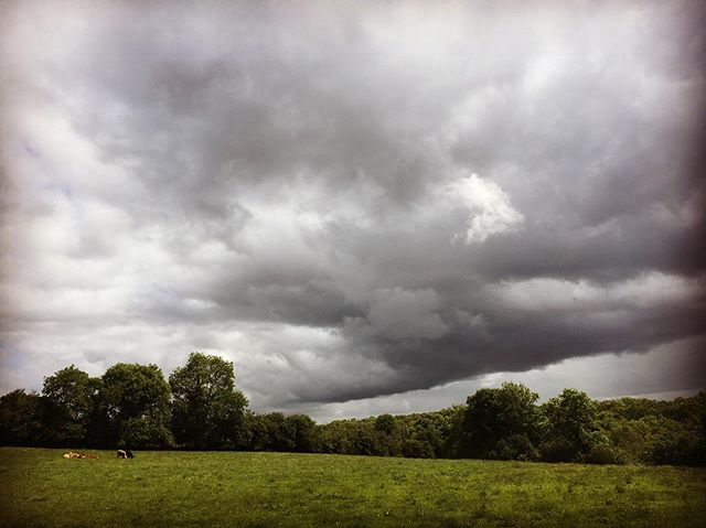 Cows under Clouds.  West Fermanagh; near the border.