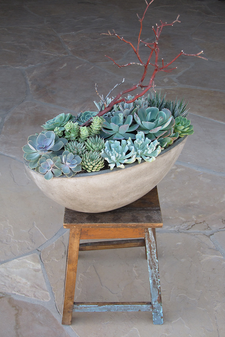 Succulent arrangement in a concrete planter by Floral Verde LLC in Cincinnati, Ohio.