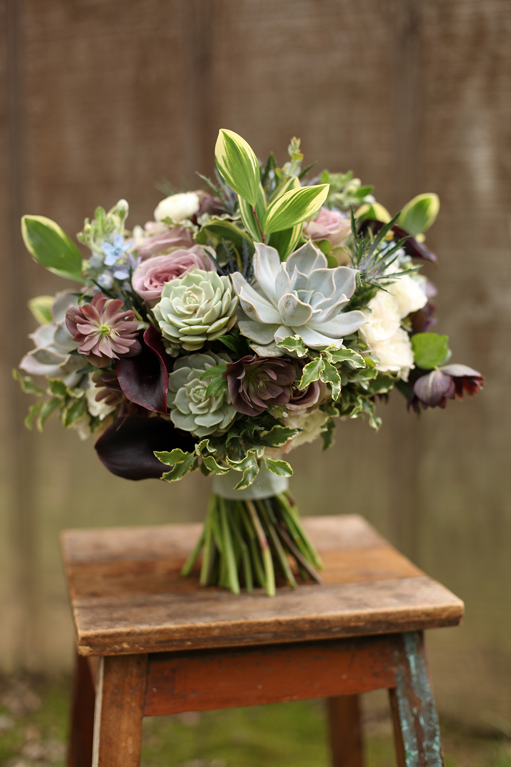 bridal bouquet by wedding florist Floral Verde LLC in Cincinnati, Ohio; with succulents, Schwartzwalder mini callas, double purple hellebores, Amnesia rose, Echeveria 'Lilacina', Echeveria 'Lola', blue tweedia, thistle, White Majolica spray roses, white ranunculus, gunnii eucalyptus, mini variegated pittosporum and variegated Solomon's Seal, with a vintage ribbon wrap.