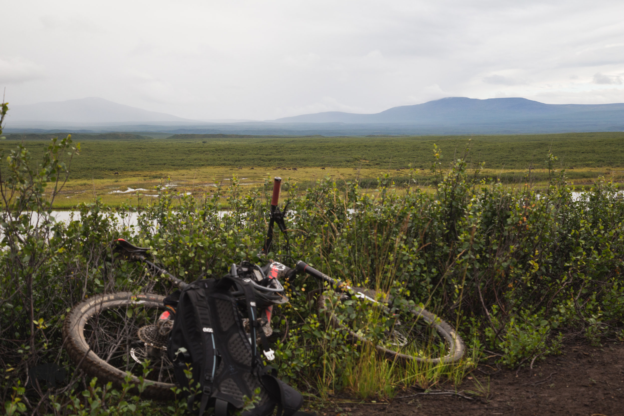 Look over my handle bars and you'll see my caribou friends. So many times have I regretted not purchasing a larger zoom lens before this trip...