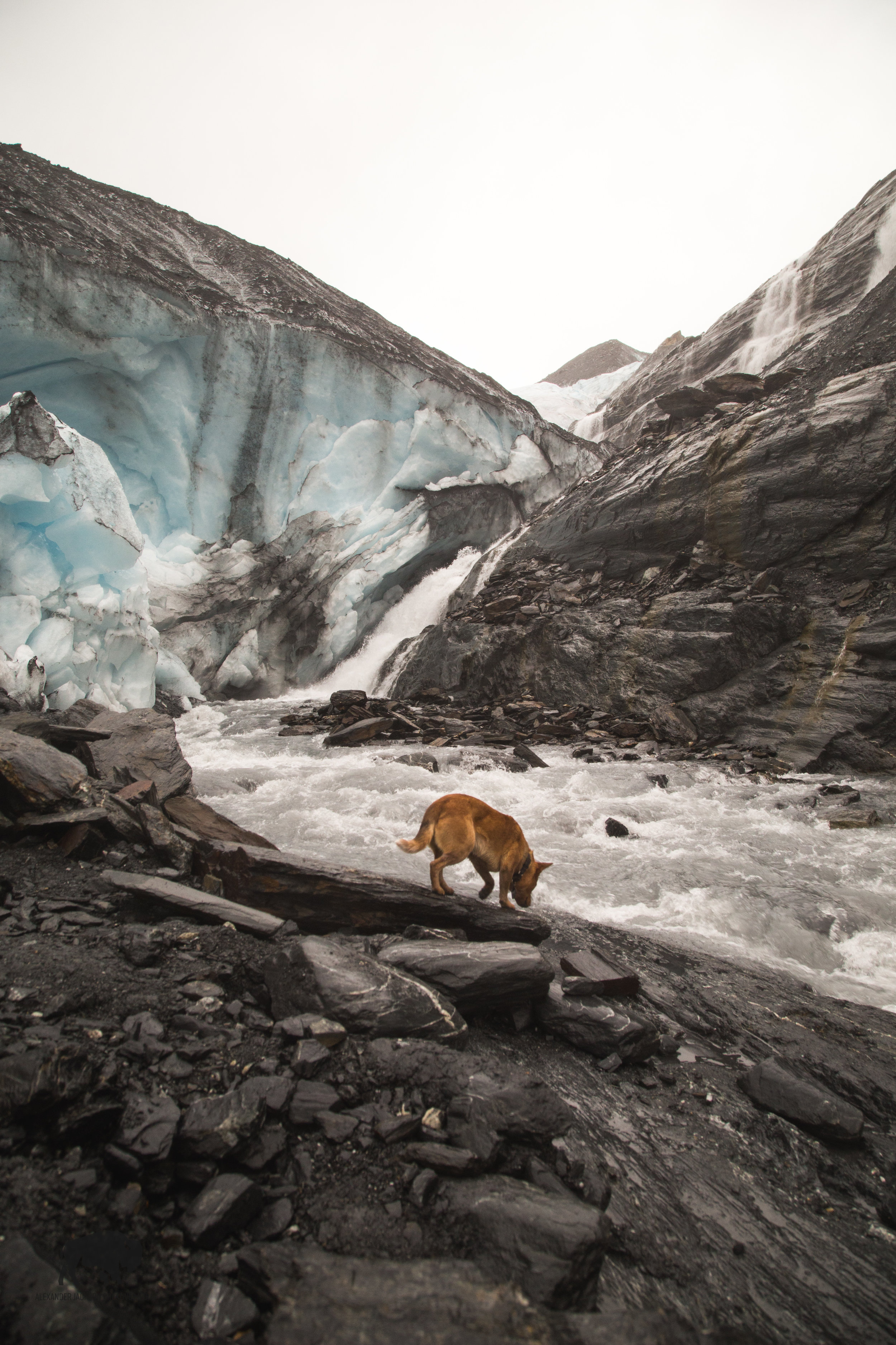 Mine and Willow's first glacial experience.